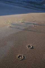 great_sand_dunes_20100928_029