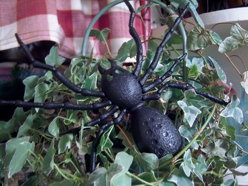 eeeekkk giant spider from kelly!
