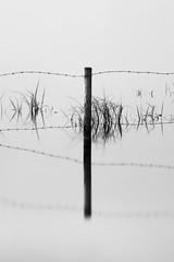 Breaking free of boundaries (Fly bye!) Tags: longexposure water fence reeds cheshire barbedwire mere marbury bigmere