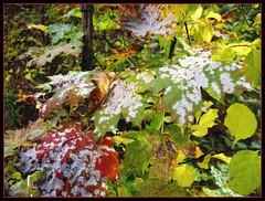 Painted Leaves (Tim Noonan) Tags: autumn light shadow colour art beauty leaves photoshop silver natural manipulation fungus shining mosca hypothetical tistheseason vividimagination artdigital shockofthenew sotn sharingart maxfudge awardtree maxfudgeexcellence maxfudgeawardandexcellencegroup exoticimage