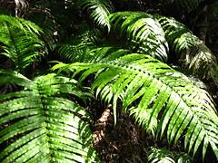 IMG_0594 (Markj9035) Tags: newzealand brokenhill thecoromandel