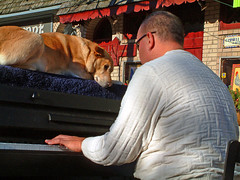 Traveling Piano Chestnut Hill, PA (TravelingPianoMan) Tags: park street city trees winter boy summer people urban music dog mountain mountains male fall girl female rural truck fun outside outdoors town spring backyard friendship random unique events country crowd group performance performing piano suburbia couples parties pickup player neighborhood driveway stop novelty jamming improvisation danny boner rest suburbs traveling roadside breeze pianist performers impromptu communities mydog jammers spontaneous synchronicity kean spontaneity poarch