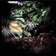 sobre flores na floresta... (gleicebueno) Tags: brazil brasil forest holga doubleexposure dani mata aflorista