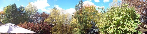 Backyard Panorama Fall Foliage