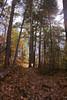 fall is in full swing (punklefish) Tags: ontario fall nature rebel hiking walk hike sudbury xs northernontario onapingfalls