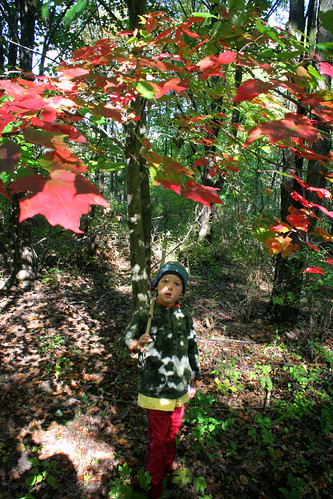 o leaves