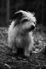 Snowball. (CisForCare) Tags: shadow bw dog white black animal canon lens outside 50mm photo mutt woods small f18 maniacs 450d
