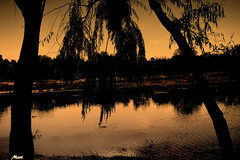 Remember the river (Mari Rasti) Tags: trees shadow sky grass river alone remember sad iran time god wave cry isfahan birdgarden clods sonyh50 marirasti