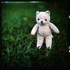 (19/77) Tags: slr film teddybear malaysia 1977 negativescan kiev88 mediumfromat kodakektacolorpro160 autaut canoscan8800f arsat80mmf28 myasin