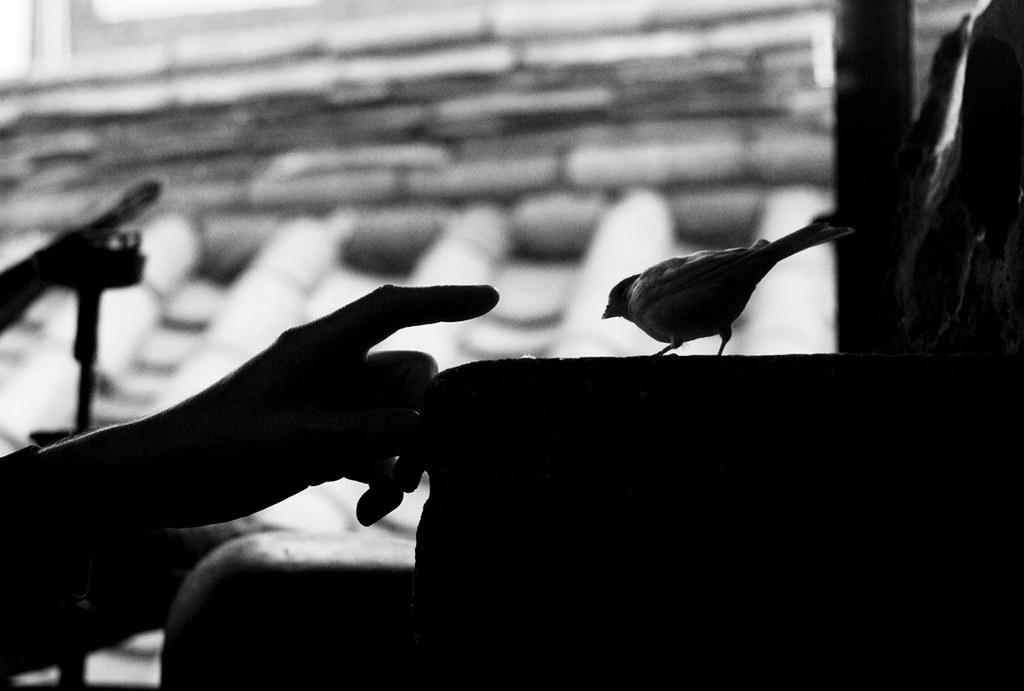 birdcafe02