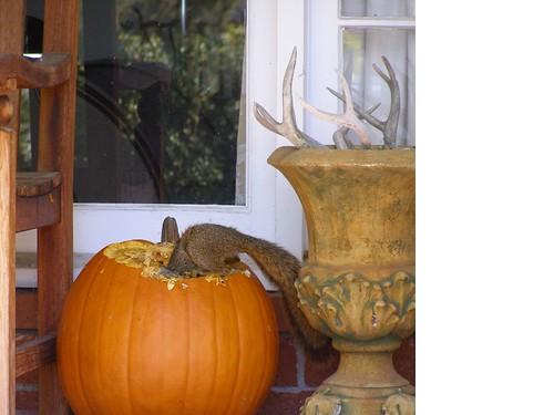 punkin squirrel2 maureen owens lafayette