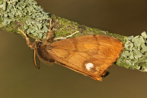 Garden mothing #47, 7 October
