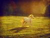 White Horse with the Fire Mane (Ekler) Tags: autumn sunset red horse white art fall nature field vintage season landscape outdoors freedom photo autum farm free running run gree svetlana mane equidae 40150mm stowers soloha