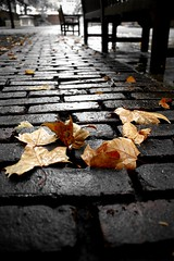 IMG_9652 (smiscandlon) Tags: autumn colour london fall leaves perspective ground fallen burial fields cobbles islington bunhill mygearandmepremium mygearandmebronze mygearandmesilver mygearandmegold