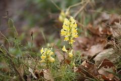 Hardy Flowers