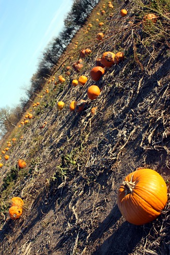 Wilsons Pumpkin Patch