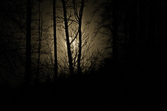 Happy Haloween (Sergiu Bacioiu) Tags: wood trees shadow moon abstract tree halloween nature silhouette woods shape