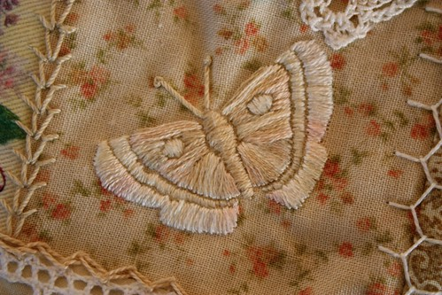 Butterfly in Cream