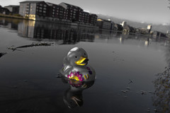 Do you know how it feels to be lonesome? (Explore) (geezaweezer) Tags: wales docks toy duck industrial decay wildlife cardiff surreal explore desaturation welsh cardiffbay bathduck tigerbay waterquarter biglittlecity geraintrowland geezaweezer doyouknowhowitfeelstobelonesome