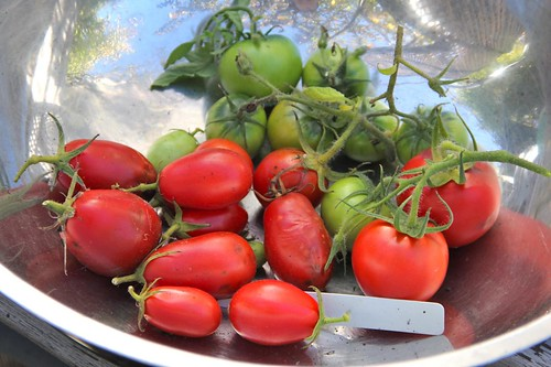 Last Tomatoes from Veggie Bed #1