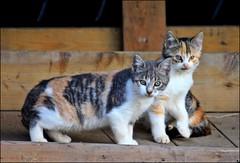 Rogue Kitties Of Lake Erie (Sue90ca Glorious Autumn) Tags: canon 15challengeswinner rebelxsi rougecats challengeclubwinner