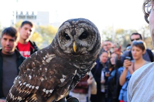 Bard Owl 1