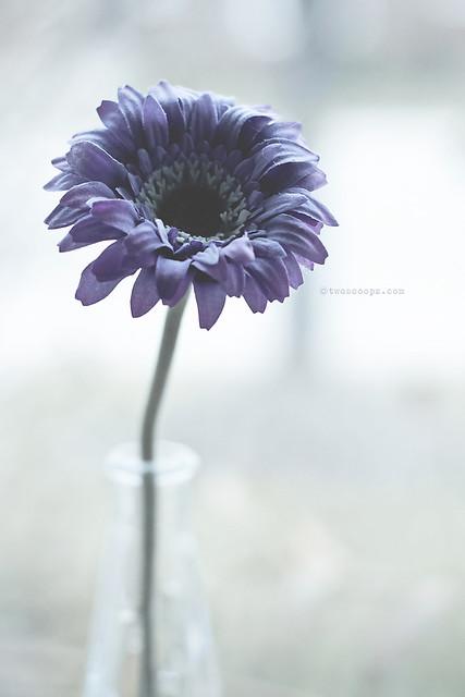 pretty purple 320/365