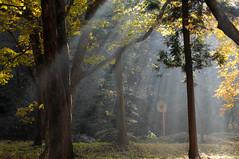 20101106 Hida 6 (In the morning sunlight) (BONGURI) Tags: sunlight sunshine bicycle cycling nikon cyclist biker kiyomi takayama 岐阜 gifu 自転車 d300 高山 ツーリング 朝日 seseragiroad せせらぎ街道 清見 sigma50mmf14exdghsm サイクリスト komorebihiroba こもれび広場