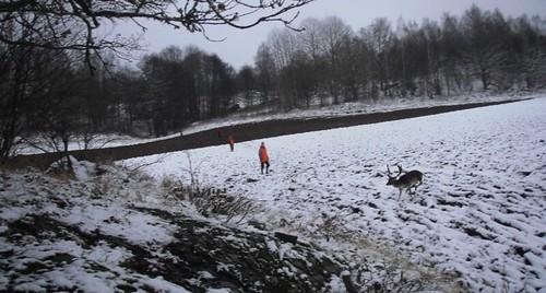 En hjort smet förbi innan vi började tredje drevet.