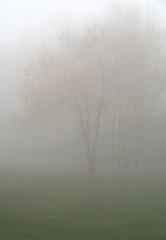 Grijs, groen en een veegje goudgeel (nikjanssen) Tags: autumn trees mist bomen herfst vanagram