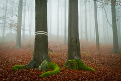 misty forest (kubais) Tags: wood mist tree misty fog forest foggy