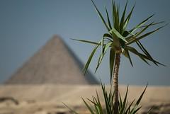 Nell'ombra di Sirio (Stefano Schwetz) Tags: egitto deserto nationalgeographic piramidi sirio circolofotograficopaullese nikonflickraward nikonflickrawardgold
