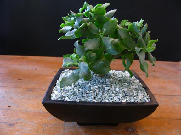 plantings 005