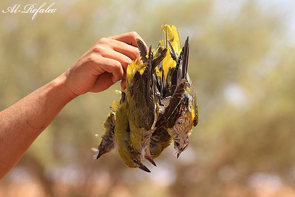 الــتـقريـر الـشـامل لصيد ((صور))