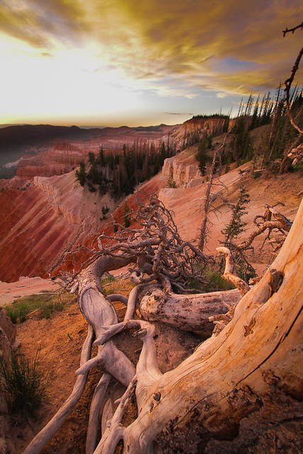Cedar Breaks NM-2.jpg