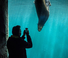 encounters (Georgie Pauwels) Tags: olympus encounters zoo smartphone smartphonephotography animals water window seal