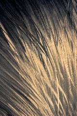 Faux jour! (Photographe Basilique-cathdrale-N-D-Qubec) Tags: orange brun contrastes focale tnbreux torsades brindilles