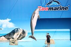 delfin mular (Olaya Garcia) Tags: portugal canon eos dolphin algarve delfin albufeira zoomarine guia bottlenose golfinho tursiops truncatus mular roaz 1000d ruaz