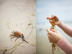 found by the sea (jasfitz) Tags: ocean california seaweed sand hands diptych surf pacific sandiego bokeh crab encinitas 50mm18 swamisbeach 5dmarkii