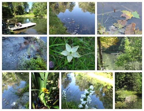 Pond Shots