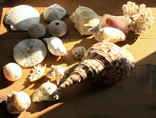 shell collection 2