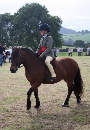 Bay pony