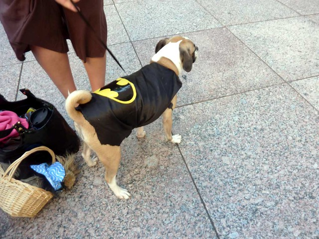 P1030832-2010-09-04-DragonCon-Parade-Bat-Dog