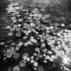 Lilypads x3 (LowerDarnley) Tags: holga multipleexposure lilypads 120s