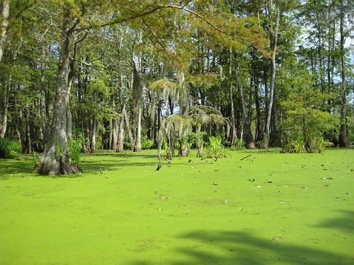 swamp tour 135