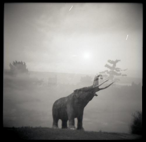 Image: 'Mastodon'  http://www.flickr.com/photos/84945051@N00/4969204850