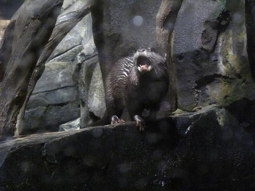 Georgia Aquarium 96