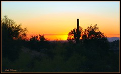 Saguaros and Sunsets (Kat Davis ©) Tags: lighting sunset arizona cactus phoenix wednesday hiking dramatic saguaro picnik kathydavis flickrgolfclub 7daysofshooting katdavisphotography week8whereiliveisfamousfor kaatdavis