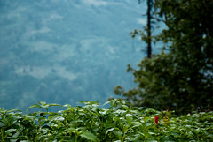 So long...valley! (K) Tags: road trip blue red wild flower green bike photography nikon purple thing valley bawa manali kullu enfield singh rohtang d60 jsb solang 18105mm jaskirat jzsinr jsb|photography