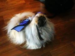 Be on the alert for Bat Dog (bazilicom) Tags: batdog mrsunshine halloweentrials